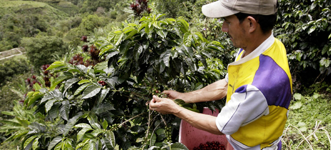 Colombia Kahvesi
